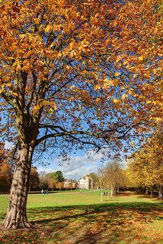 Colourful Autumn, at Windsor, United Kingdom