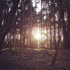 【chick_tac】さんのInstagramの写真をピンしています。《過去picより✨ 元旦の醍醐寺⛩ 初詣に行った帰りに神々しくて撮った一枚📸 #daigoji #kyoto #sun #sunshine #japan #landscape #photo #photography #japan_daytime_view  #醍醐寺 #京都  #太陽 #光 #木漏れ日 #林 #日本 #日本の風景 #風景 #写真 #写真好きな人と繋がりたい #写真撮ってる人と繋がりたい  #goodnight》