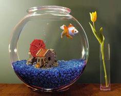 Verdade ou mito: Peixe não cresce em aquários pequenos?  Se você comprar um peixe que tem tendência a crescer e colocar em um aquário pequeno, ele vai desenvolver menos do que em um aquário grande, mas ele vai crescer e ficar grandão, porque o extinto dele é crescer. O que acontece com o peixe que cresce demais em um aquário pequeno?  Descubra em: http://blog.petadore.com.br/dicas/peixe-nao-cresce-aquarios-pequenos.html
