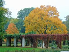 Ostdeutscher Rosengarten, Forst Lausitz, Pergolenhof