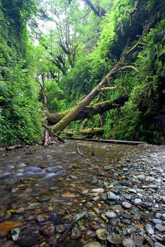 Fern Canyon in the Redwood National Park, California #beautiful #places to #travel