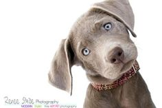 Amazing pet photographers