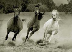 Young brood mares: Photo by Photographer Wojtek Kwiatkowski - photo.net