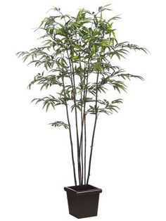 6' Black Bamboo Tree w/975 Lvs. in Wood Pot Two Tone Green (Pack of 2) >>> Be sure to check out this awesome product.