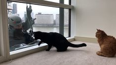 These Cats Love Window Cleaners - Kitties have an exception bond with th...