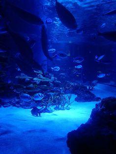 海 #Osaka #Japan #sea osaka Japan sea