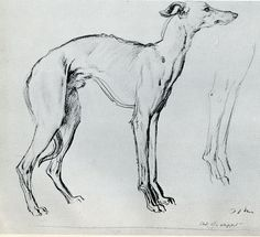 Study of a Whippet, Augustus John (1878-1961). Cooper Gallery, Barnsley.