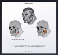 Anatomy in Character Design