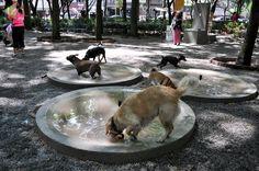 Los mejores parques para mascotas de la CDMX