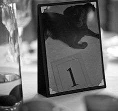 Love this! Pictures of your dog(s) as table numbers at your wedding.