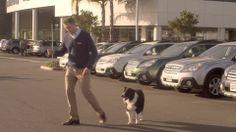 Subaru Dog Tested: Last One (+playlist)