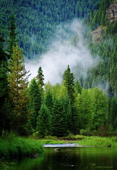 ✯ Coeur d'Alene River in the Panhandle National Forest - Idaho