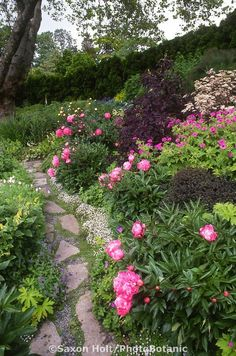 Stepping stone path through perennial garden with peonies .... so beautiful ! by manuela