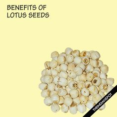 Lotus seeds are obtained from lotus flowers and they can be eaten raw or cooked. The seeds are available in various dry fruits store and...