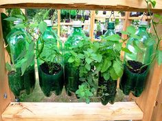 Hanging bottle garden #diy #recycle....could be an interesting idea for a science experiment...hmmm
