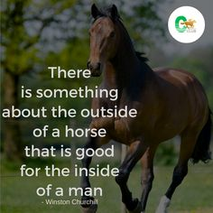 One of the more attractive and gentle-natured creatures of all time! Do you agree?  #horse #racingpost #racinghorses #uk #ireland