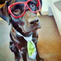 The dog suits up! Fancy tie and killer glasses for that real smartass-dawg look.