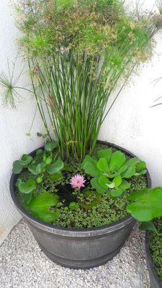 Backyard Garden For Beginners Small Water Gardens, Container Water Gardens, Indoor Water Garden, Container Pond, Container Gardening, Backyard Garden Design, Ponds Backyard, Backyard Landscaping, Fence Garden