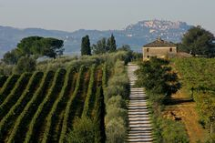 """Vino Nobile di Montepulciano (Rosso as normal and Riserva). According to the current production regulations it's obtained from Sangiovese, called """"Prugnolo Gentile"""" at Montepulciano, minimum 70%  may be joined up to 30% by other varieties authorized for the Tuscany Region."""
