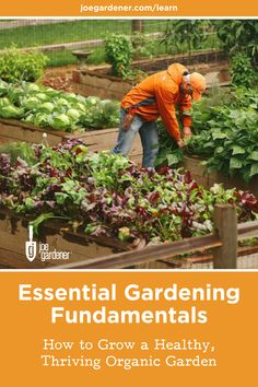 Have you always wanted to learn how to grow food organically?  There's never been a better time to start learning how to garden. I'll teach you everything you need to know to start growing your own food.  Learn how to grow a thriving edible garden in my online gardening course - Essential Gardening Fundamentals. #growfood #growyourownfood #organicgardening #gardeningbasics #learntogarden #gardeningbasics #fundamentalsofgardening #gardeningcourses #digitalcourses Grow Food, Grow Your Own Food, Gardening Courses, Edible Garden, Compost, Vegetable Garden, Organic Gardening, Mother Nature, House Ideas