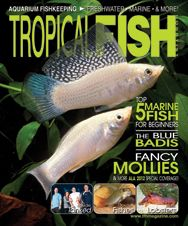 The May 2012 issue of TFH is our annual livebearer issue featuring different types of goodeids, mollies, and general tips on livebearer care. On the marine side, there are slipper lobsters and the top 5 fish for beginning reef aquarists.