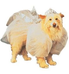 Fairy Tail Halloween Pet Costume Size Small « Pet Advertisings