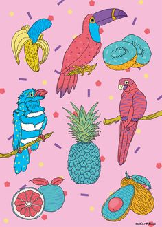 Miriampersand : Colorful birds and tropical fruits