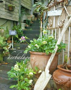 Potting Shed Ideas Green Garden, Garden Plants, Garden Junk, Home And Garden, Landscape Design, Garden Design, Christmas Rose, Flower Pots, Flowers