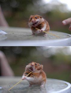 hamsters. especially ninja ones.
