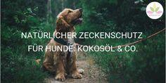 Natürlicher Zeckenschutz für Hunde: Kokosöl & Co.  AROMA 1x1 Animals Amazing, Majestic Animals, Cavapoo, Goldendoodle, Thailand Travel, Asia Travel, Animal Mashups, Animal Movement, Pomsky