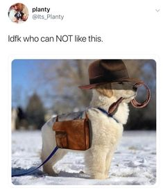 Twenty-Three Animal Memes Because, Well, They're Better Than People Memes - funny animal pictures Cute Little Animals, Cute Funny Animals, Funny Cute, Super Funny, Cute Puppies, Cute Dogs, Small Puppies, Clean Funny Memes, Hilarious Memes