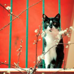 """""""fullcats:  milkle:  mazucon:  by order of appearance: some flowers, my cat, the red wall. (via i.anton)  (via picapixels)   """""""
