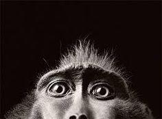 Bilderesultat for animal photography