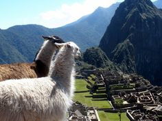 Machu Picchu - the most amazing place I have ever been