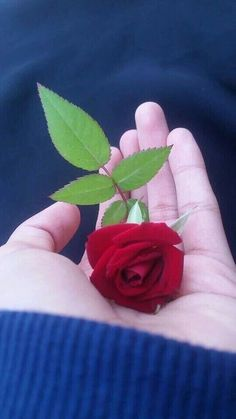 love photo dp