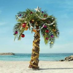 Christmas in July tropical Christmas tree Christmas Palm Tree, Tropical Christmas, Beach Christmas, Coastal Christmas, Christmas In July, Christmas Lights, Christmas Decorations, Christmas In Florida, Turquoise Christmas