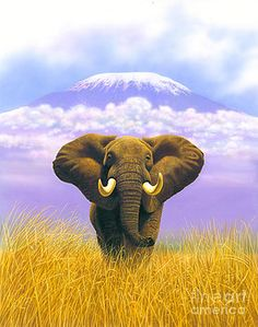 MGL Studio - Chris Hiett - Elephant at Table Mountain