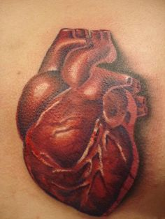 One of the best anatomically correct heart tattoo's I've seen. I love it