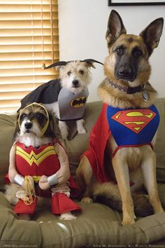 Super Hero Hounds