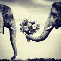 Love is adorable! Sketch idea.