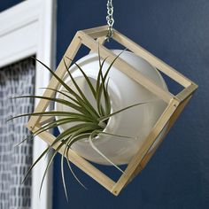 Upcycled light globe plant container