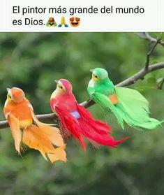 Photos For Facebook, Facebook Image, Good Afternoon, Good Morning, Artificial Birds, Dove Bird, Garden Trees, Little Birds, Morning Images