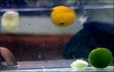 Floating Lemons and Sinking Limes - The Lab