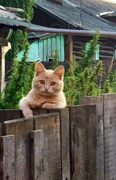 Cat on the fence Love My Dog, I Love Cats, Cool Cats, Pretty Cats, Beautiful Cats, Animals Beautiful, Animals And Pets, Funny Animals, Cute Animals