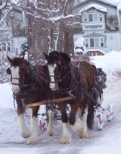 sleigh rides at the homestead resort - midway, utah