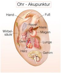 Ohr-Akupunktur.Organe aktivieren