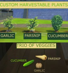 Sims 4 Updates: Mod The Sims - Plants : Trio of Veggies Custom Garlic, Parsnip and Cucumber by icemunmun, Custom Content Download!