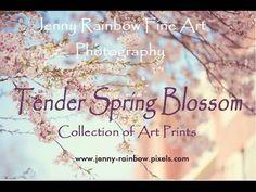 Tender Spring Blooms. Jenny Rainbow Fine Art Photography