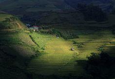 The sun illuminates rice terraces in Mu Cang Chai district, Yen Bai province, Vietnam on September 27, 2015.