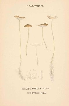 dessin gravure couleur de champignon